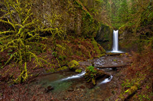 Обои США Водопады Осень Мох Ствол дерева Wiesendanger Falls Oregon Природа фото