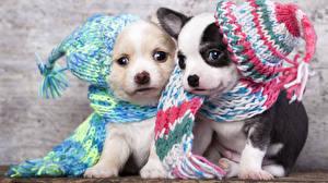 Картинка Собаки Щенок Вдвоем Шапки Шарф Животные