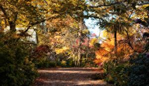 Обои Австралия Парки Осень Деревья Листья Mount Wilson Природа