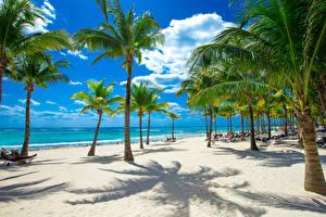 Обои Тропики Побережье Небо Пляж Пальмы Природа фото