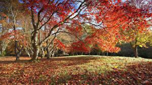 Фотографии Осень Деревья Листья Природа