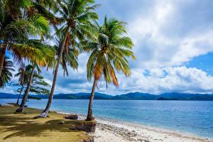 Обои Филиппины Тропики Побережье Пейзаж Пальмы Природа фото