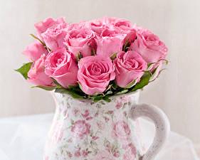 Фото Розы Крупным планом Розовый Цветы