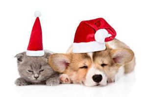 Картинки Рождество Кошки Собаки Щенок Котята Шапки Вельш-корги Сон 2 Животные