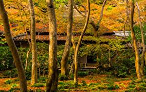 Фото Япония Дома Осень Киото Деревья Ствол дерева Листья