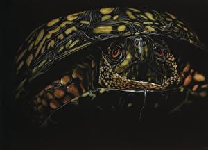 Обои Черепахи Рисованные Крупным планом Черный фон Животные