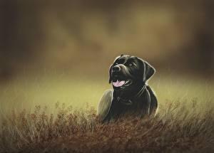 Обои Собаки Рисованные Трава Ретривер Язык (анатомия) Животные фото