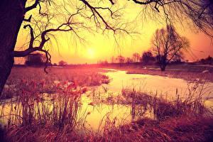 Картинка Рассветы и закаты Речка Осенние Деревья Ветвь