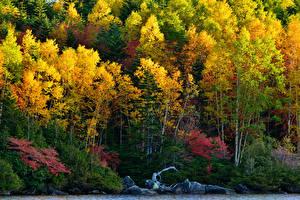 Фотографии Осенние Леса Деревья