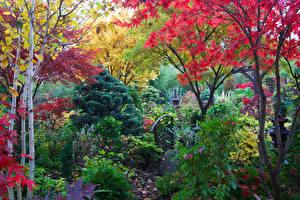 Картинки Англия Парки Осенние Кусты Деревья Walsall Garden