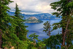 Картинки США Парки Озеро Гора Пейзаж Ель Crater Lake national Park Oregon Природа