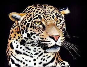 Обои Большие кошки Ягуары Рисованные Черный фон Морда Взгляд Усы Вибриссы Животные фото