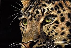 Обои Большие кошки Леопарды Глаза Рисованные Черный фон Усы Вибриссы Взгляд Животные фото