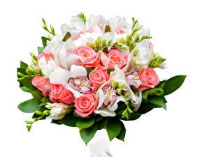 Обои Букеты Розы Орхидеи Фрезия Белый фон Цветы фото