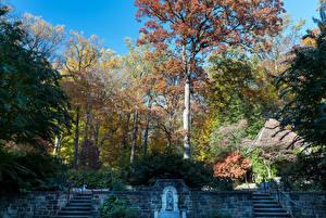 Фото США Парки Осень Лестница Деревья Nemours Mansion and Gardens Природа