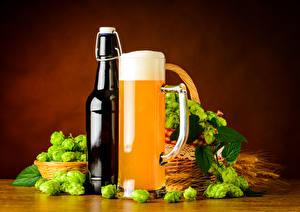 Картинки Пиво Хмель Пене Кружка Бутылки Пища