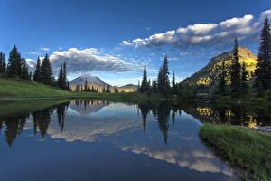 Фотографии США Парк Озеро Горы Небо Пейзаж Облако Ели Маунт-Рейнир парк Tipsoo Lake