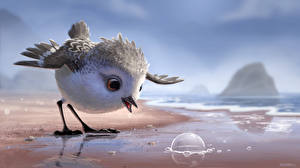 Картинки Птицы Побережье Piper (2016) Мультфильмы