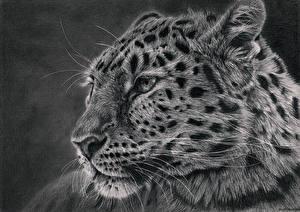 Обои Большие кошки Леопарды Рисованные Голова Черно белое Усы Вибриссы Животные фото