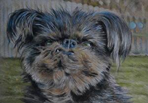 Обои Собаки Рисованные Морда Взгляд Животные фото