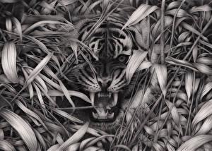 Обои Большие кошки Тигры Клыки Оскал Зубы Трава Черно белое Взгляд Животные фото