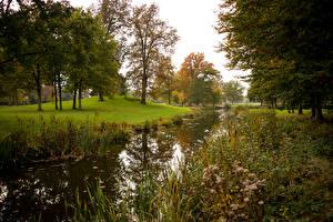 Обои Нидерланды Реки Осень Деревья Трава Brummen Guelders Природа фото