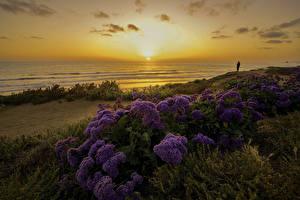 Обои Штаты Побережье Рассвет и закат Пейзаж Вечер Сан-Диего Солнца Природа