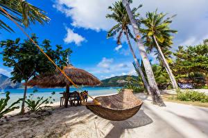 Фото Филиппины Тропический Побережье Пальмы Песок Гамак Пляжа Природа