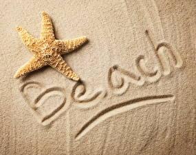 Обои Морские звезды Песок Пляж фото