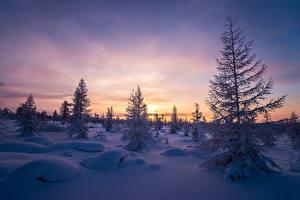 Фотография Зимние Рассветы и закаты Небо Вечер Снег Ель Природа