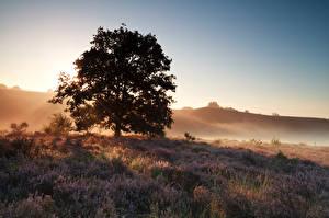 Обои Рассветы и закаты Утро Деревья Heather Flowers Природа фото