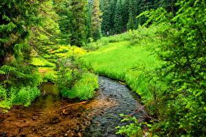 Обои США Парки Ели Ручеек Траве Crater Lake national Park Oregon Природа