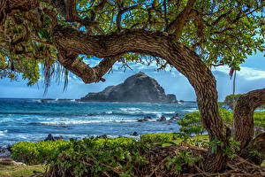 Фото Гавайи