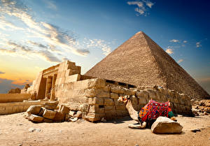 Фотография Египет Пустыни Верблюды Камень Пирамида Cairo Природа