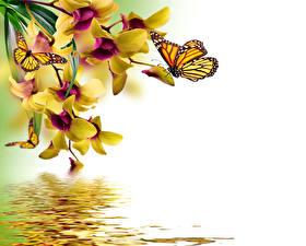 Обои Бабочки Данаида монарх Орхидеи Вода Шаблон поздравительной открытки Цветы фото