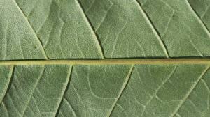 Обои Текстура Крупным планом Макро Листья Зеленый Природа фото