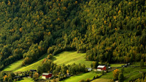 Обои Норвегия Леса Луга Дома Сверху Skjelle Природа фото