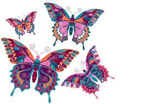 Фотографии Бабочки Рисованные Белый фон Животные