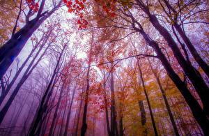 Фото Осень Деревья Ствол дерева Вид снизу