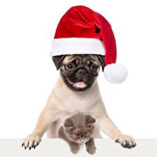 Обои Рождество Собаки Коты Котята Шапка Мопса Белый фон животное