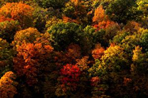 Фотография Сезон года Осенние Деревья