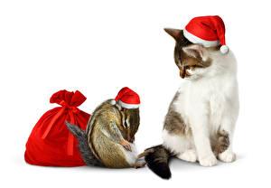 Картинки Новый год Коты Бурундуки Шапки Белый фон Подарки Животные
