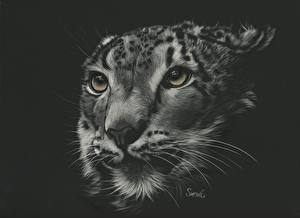Обои Большие кошки Барсы Рисованные Морда Усы Вибриссы Черно белое Черный фон Животные фото