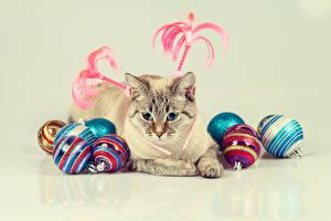 Фотография Новый год Коты Цветной фон Шарики Животные