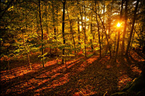 Картинки Осенние Леса Деревья Листва Лучи света Солнце