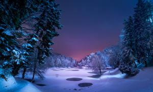 Обои Зима Снег Ель Ночь Деревья Природа фото