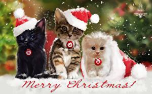 Фотография Кошки Рисованные Новый год Трое 3 Шапки Котят Животные