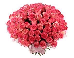 Обои Букеты Розы Белый фон Розовый Цветы фото
