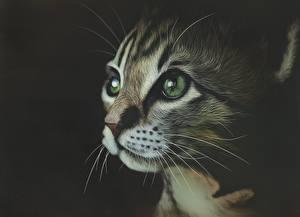 Обои Рисованные Кошки Глаза Морда Усы Вибриссы Черный фон Животные фото