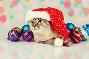 Фото Праздники Новый год Кошки Шапки Шар Животные